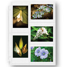 400 pocket photo album 400 photo album on exposures online