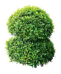 ornamental plant royalty free stock photos image 28847738