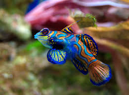 all colorful marine aquarium fish species
