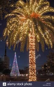 palm tree with christmas lights on marion square in historic stock