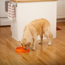 How Does Laminate Flooring Hold Up To Dogs A Complete Guide To The Very Best Dog Puzzle Toys Available
