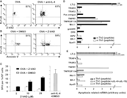 il 4 utilizes an alternative receptor to drive apoptosis of th1