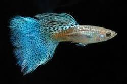 anuaquarium fish farm palakkad manufacturer wholesaler of
