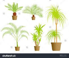 indoor palm indoor plants vector background set stock vector 115300651