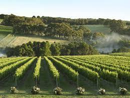 wineries food and wine victoria australia