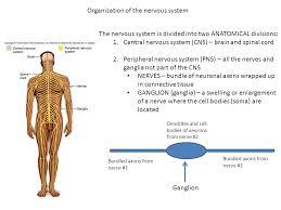 Anatomy And Physiology Nervous System Study Guide Bio 211 Anatomy And Physiology I Today U0027s Topics Nervous System