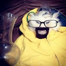 18 adorable animals in halloween costumes u2013 risefeed