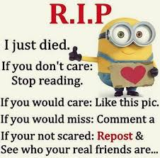 43 Best Funny Images On - funny minions from charlotte 11 02 18 pm saturday 13 august 2016