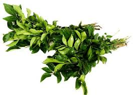 Curry Leaf Plant Diseases - ban on fresh curry leaves disappoint british asians