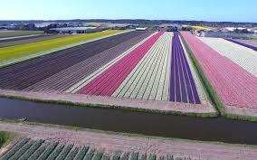 Netherlands Tulip Fields Video Flower Fields In The Netherlands Travel Leisure