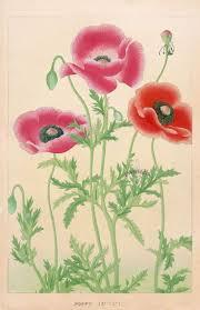 Japanese Flower Artwork - 33 best japanese woodblock antique prints images on pinterest