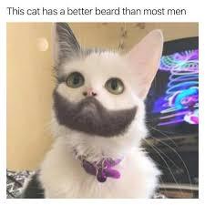 Cat Beard Meme - dopl3r com memes this cat has a better beard than most men