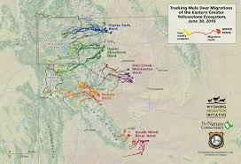 Migration Map Mapping The Migrations Of The Greater Yellowstone U2013 Cool Green Science