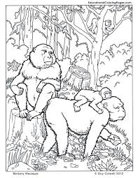 89 coloring pages animals jungle coloring forest