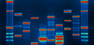 dna mapping developing the human genome your help line
