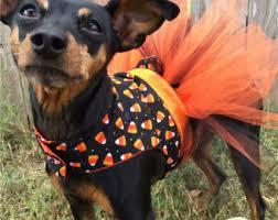 Halloween Pet Costume Costumes Pets Etsy