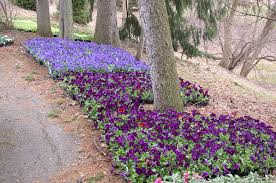 Arts Garden Indianapolis Garden Design With Spring Flowers Dirt Simple Dengue Fever