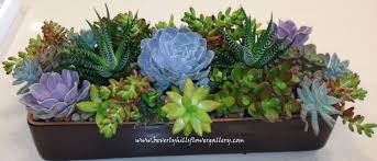 succulent arrangements succulent arrangement beverly flower gallery