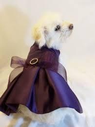 dog wedding dress published wedding photographer toronto toronto wedding