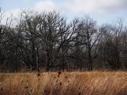 native prairie plants illinois prairie walks u2013 page 2 u2013 arthur melville pearson