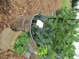 flower gardening 101 container gardening 101 is full seattle tilth association