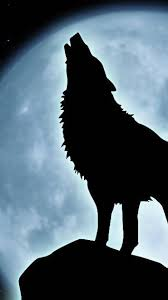 screenheaven howling wolf moon dogs desktop and mobile background