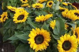 organic heirloom seeds non gmo via catalog u0026 online order list
