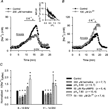sodium influx pathways during and after anoxia in rat hippocampal