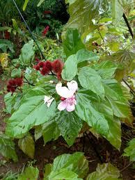 drought tolerant plants la hoja nueva