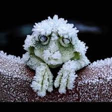 the alaskan tree frog freezes solid in the winter stopping it s