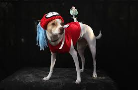 halloween images for desktop 41 hilarious pictures of howl o ween dogs today com