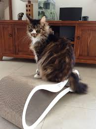 Cat Scratch Lounge Cat Scratching A Stylish Occupation Pet Problems Solved