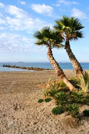 spanish mediterranean sandy beach with palm trees in almeria andalusia spain