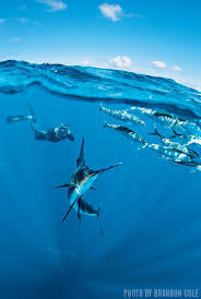 233 best ocean life images on pinterest ocean life animals and