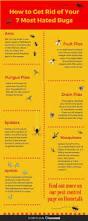 best 25 ants in house ideas on pinterest homemade ant killer