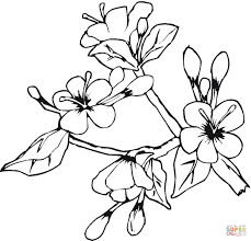 easter spring flowers coloring page free printable coloring pages