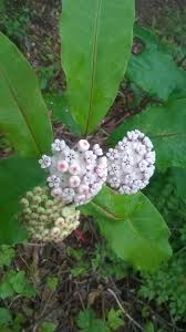 sc native plants 12 best images about native plants and trees on pinterest