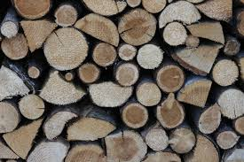 gov t wants to ban wood export business review