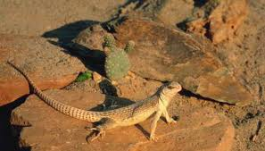 Snake Holes In Backyard Desert Animals That Hide In Holes Animals Mom Me