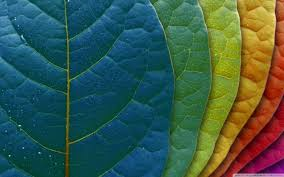 Colorful Pictures Colorful Leaves Hd Desktop Wallpaper High Definition