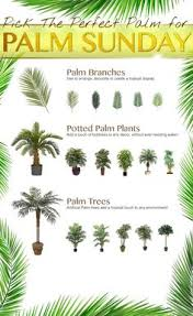 palm sunday palms for sale what to do with palm sunday palms crafts palm