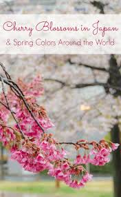 best 25 cherry blossoms in japan ideas on pinterest japan