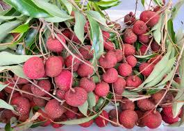 lychee fruit inside mango u0026 lychee season 2014 u2013 tasty island