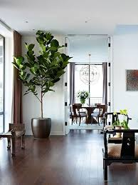 stunning best indoor trees pictures amazing house decorating