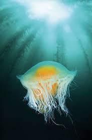 50 stellar american dive sites scuba diving
