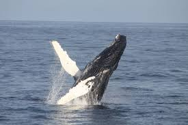 Whale by Whale Watching In West Cork Ireland With Colin Barnes Cork