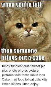 Kittens Memes - 25 best memes about kitty kitty kittens kitty kitty kittens