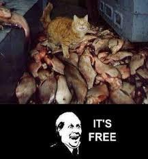 It S Free Meme - it s free meme by googletroll memedroid