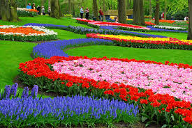 colorful flower garden flowers photography desktop wallpapers with
