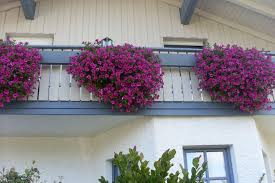 balkon blumen balkonblumen blumen kefer